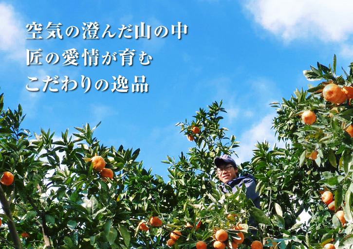 ザ・みかん みかんの花咲く様子(2020年)と春草を有機肥料に!!元気いっぱいの果樹で育てます!!_a0254656_15081849.jpg