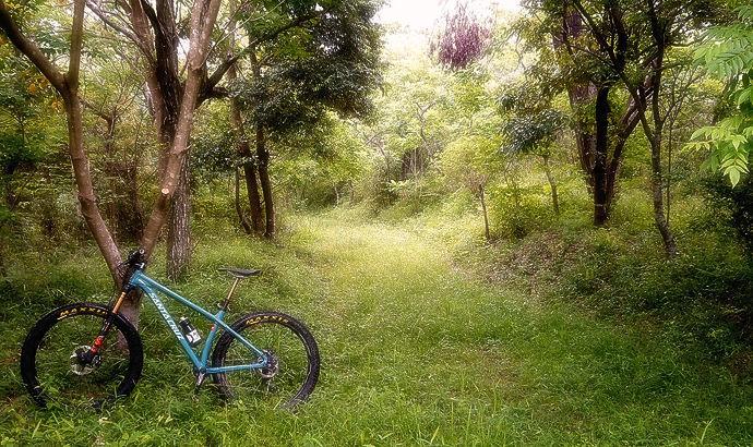Santa Cruz Chameleon_b0049658_20123276.jpg