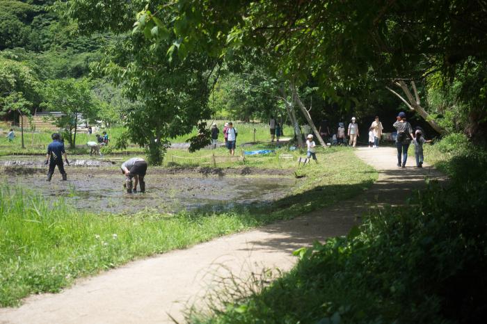 森の遊歩道。_b0022268_18521638.jpg