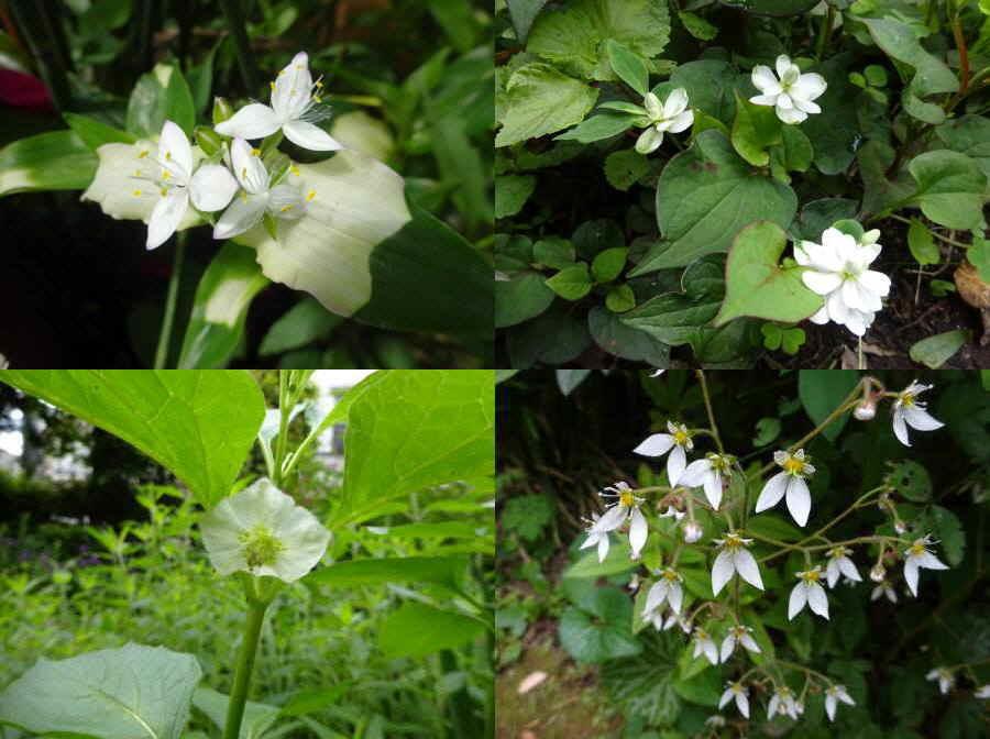 庭の花 春その13_f0059673_14192299.jpg