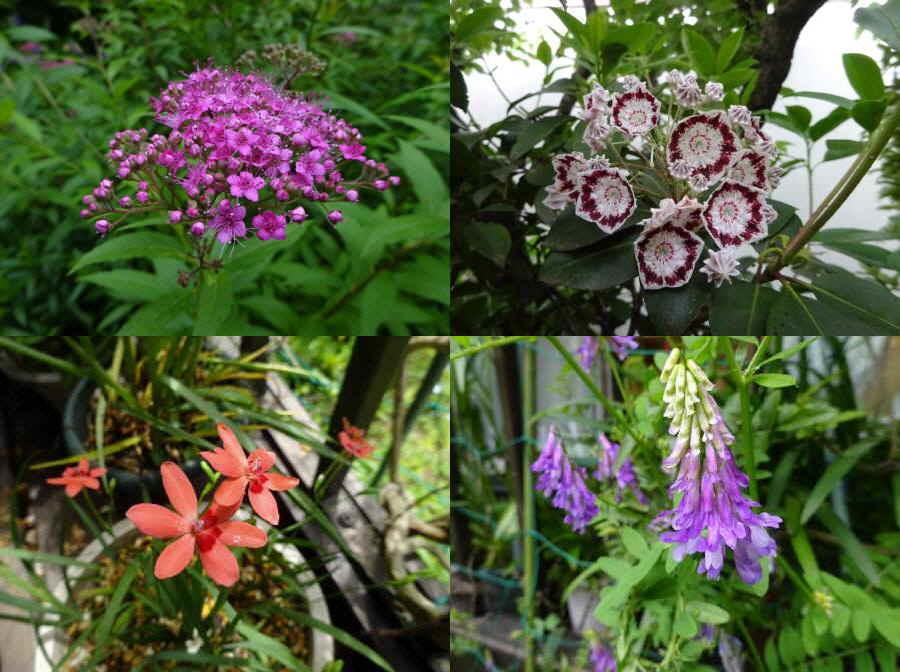 庭の花 春その13_f0059673_14261987.jpg
