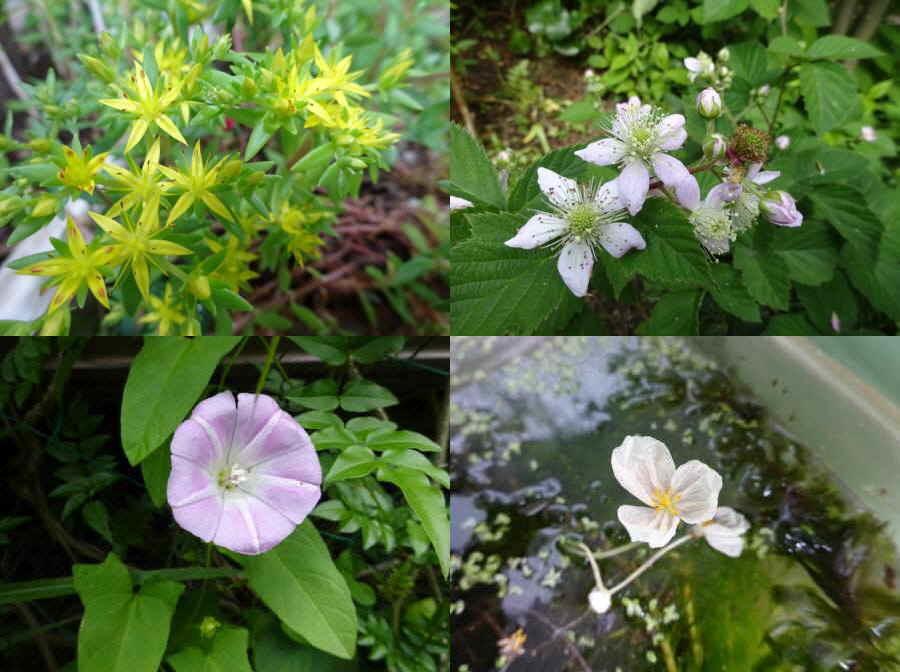 庭の花 春その13_f0059673_14270852.jpg