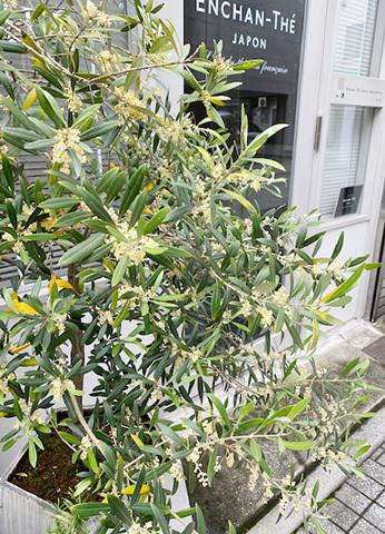 J\'aime Tokyo au moi de mai !_f0038600_23275088.jpg