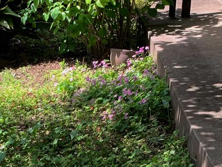 5月の庭 2020 - 2_f0239100_17391300.jpg