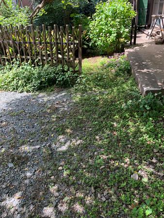 5月の庭 2020 - 2_f0239100_17471985.jpg