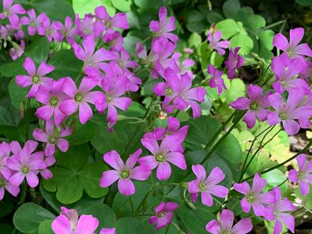 5月の庭 2020 - 2_f0239100_17502190.jpg