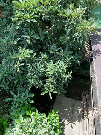5月の庭 2020 - 2_f0239100_18095655.jpg