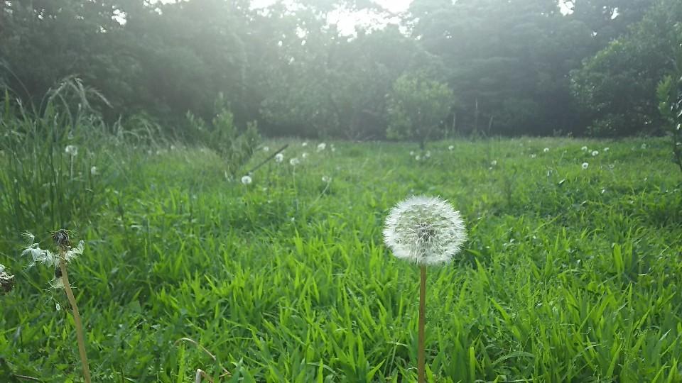 5月29日  今日の風に..._a0204408_12185827.jpg