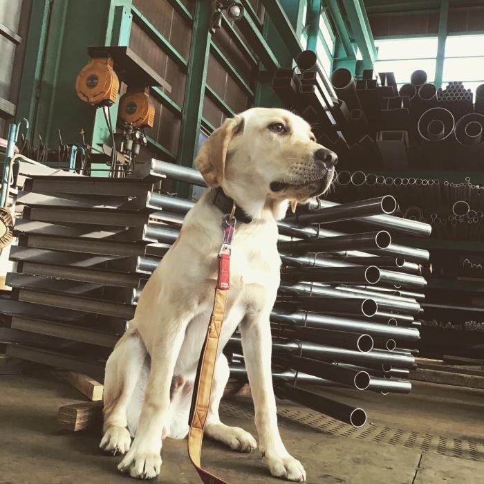 我が社の看板犬。_a0210112_18091980.jpg