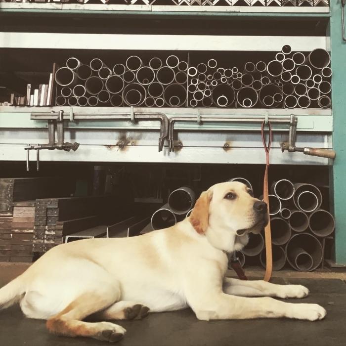 我が社の看板犬。_a0210112_18092170.jpg
