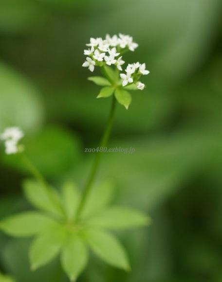 散歩道の植物_a0304423_00071451.jpg