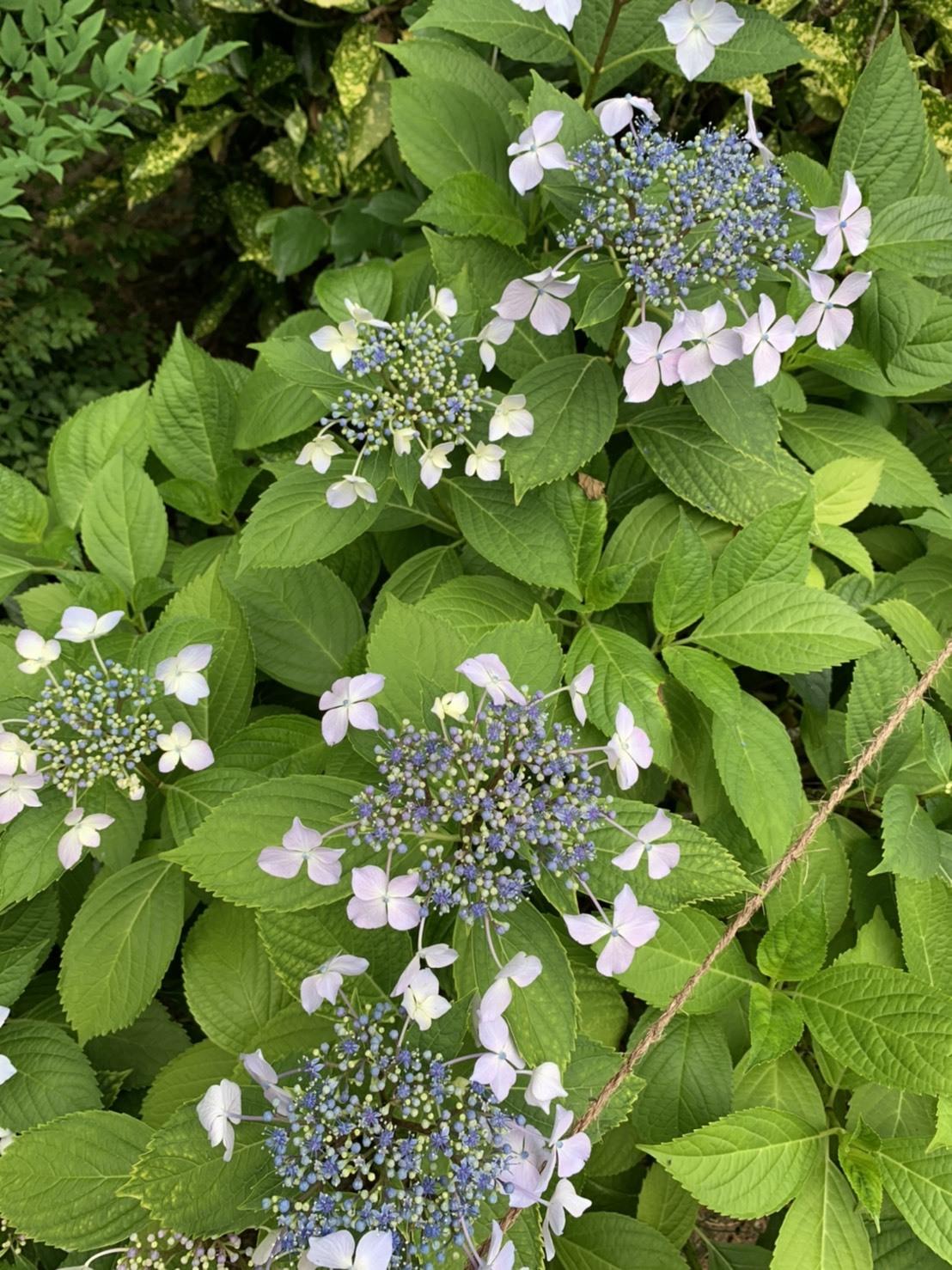 園庭にもたくさんのお花が咲きました!_d0053323_07543749.jpeg