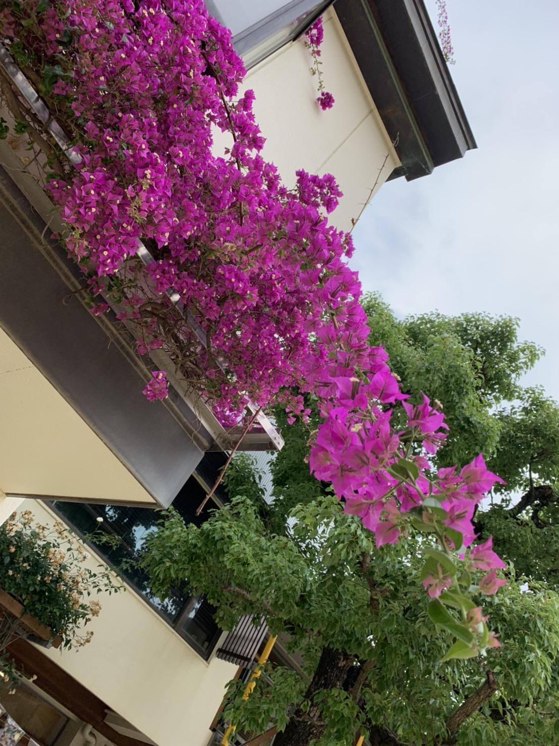 園庭にもたくさんのお花が咲きました!_d0053323_07552338.jpeg