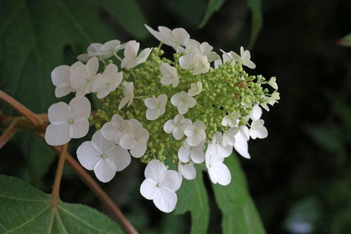庭の花_c0404426_10243543.jpg
