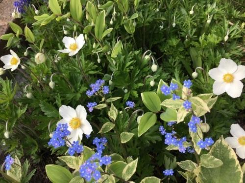 ゆっくり咲き出したお花たち_e0326953_14573051.jpg