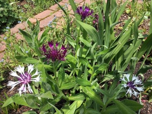 ゆっくり咲き出したお花たち_e0326953_14585655.jpg