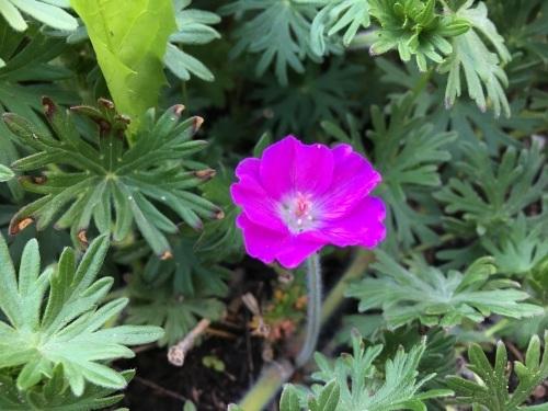 ゆっくり咲き出したお花たち_e0326953_15004499.jpg
