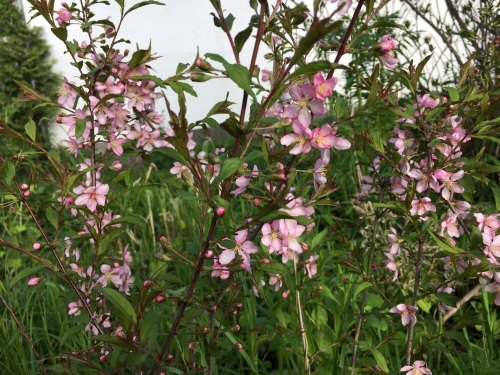 ゆっくり咲き出したお花たち_e0326953_15010191.jpg