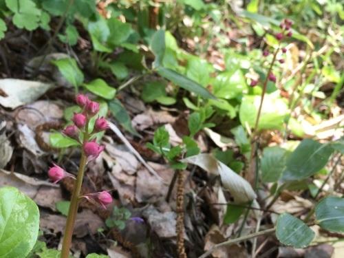 ゆっくり咲き出したお花たち_e0326953_15012374.jpg