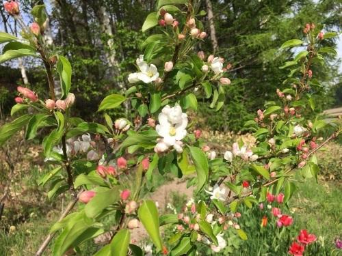 ゆっくり咲き出したお花たち_e0326953_15202590.jpg