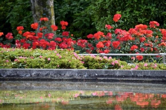 薔薇公園へ_a0355356_17424560.jpg