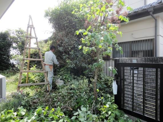 お庭の手入れ_d0251858_15510356.jpg