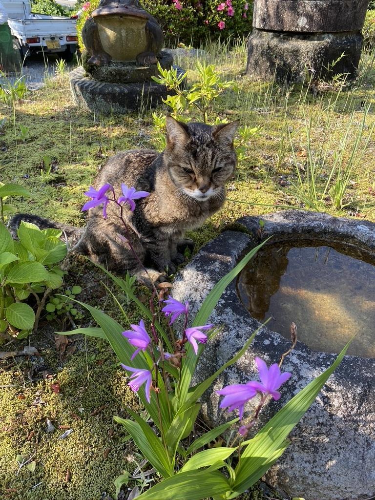 猫のウグちゃんの近況報告です。_c0334574_19405181.jpeg
