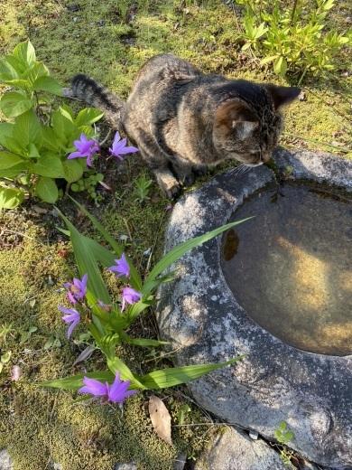 猫のウグちゃんの近況報告です。_c0334574_19410475.jpeg
