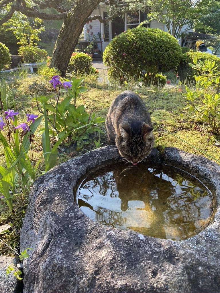 猫のウグちゃんの近況報告です。_c0334574_19411878.jpeg