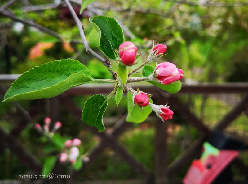 野菜畑に新芽が続々…むふふふ(^。^)_f0067179_00060038.jpg