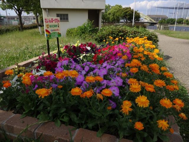 中川口緑地 キンシバイなど開花の様子R2.5.27_d0338682_08524711.jpg