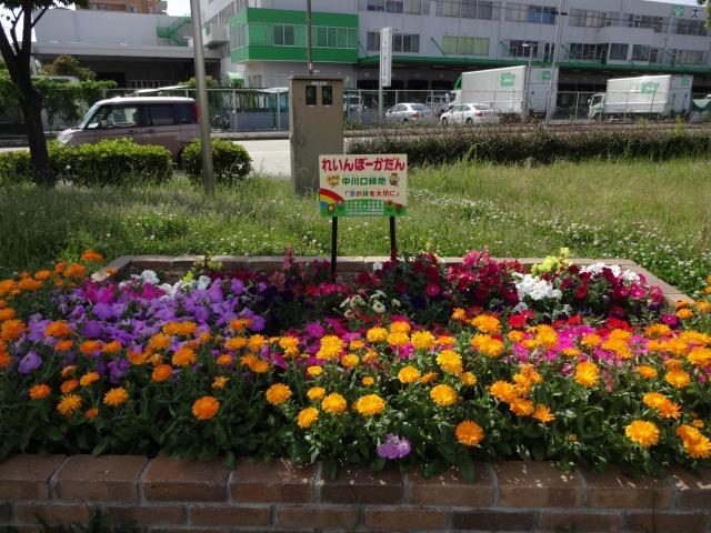 中川口緑地 キンシバイなど開花の様子R2.5.27_d0338682_08541144.jpg