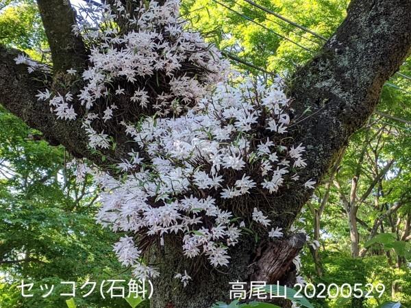 高尾山_b0061890_19284647.jpg