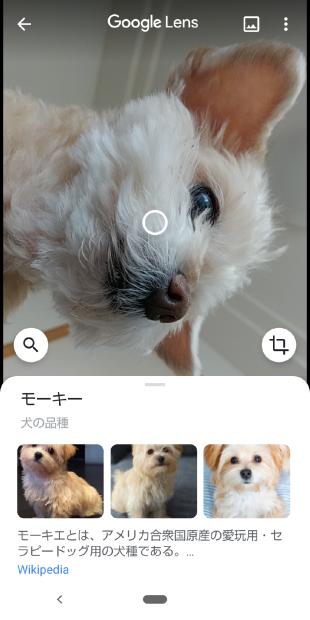 こむぎちゃんとGoogle_c0109891_23115400.png