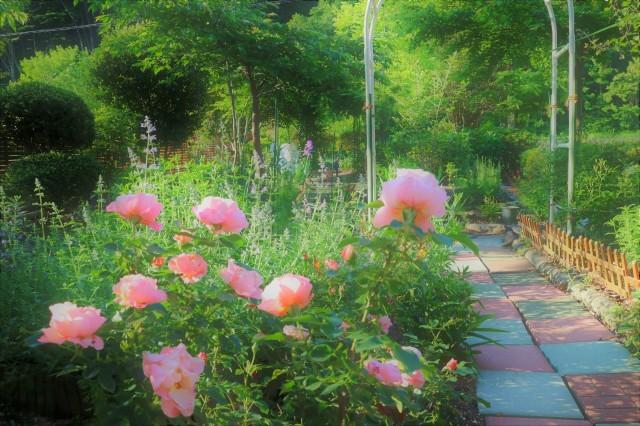 早起きをして庭活~♪_e0397815_23345008.jpg