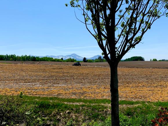 ツツジが咲き始めました。_f0096216_09194556.jpg
