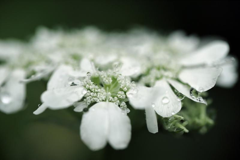 雨のオルレア_e0169421_21174151.jpg