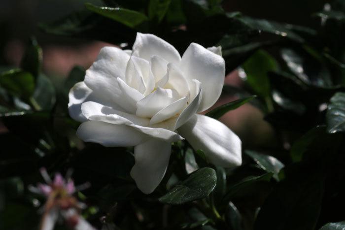 庭の花_c0404426_20224150.jpg