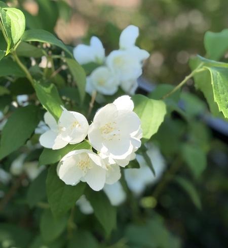 お花いろいろ_b0100229_13080726.jpg