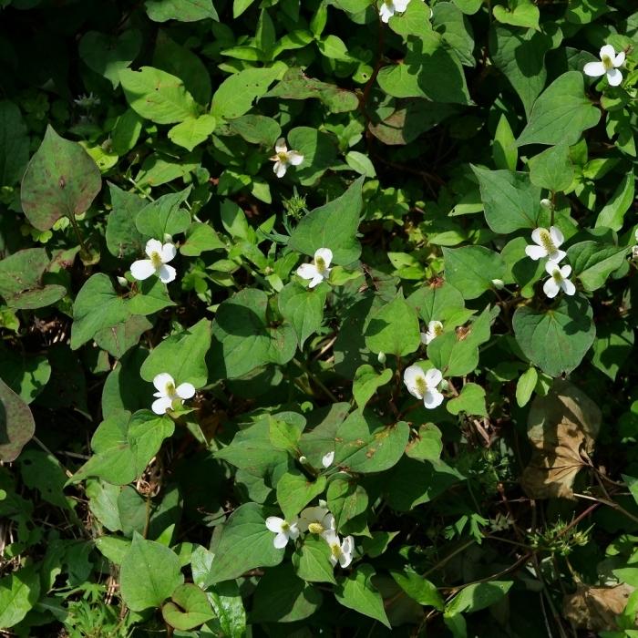 My Garden ささやかな幸せ_f0050534_09405489.jpg