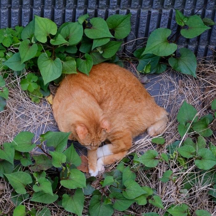 My Garden ささやかな幸せ_f0050534_09425585.jpg