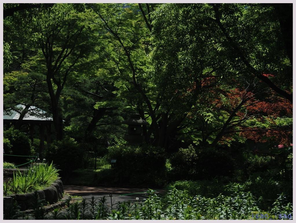 日比谷公園-1   026)_c0068050_22425989.jpg