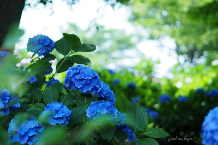 Blue_e0268051_14581971.jpg