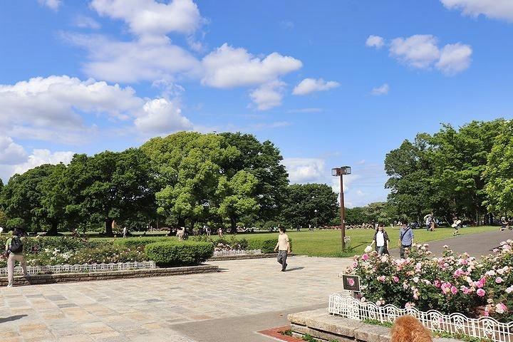 季節の移り変わりを実感した散歩。_b0111376_15133597.jpg
