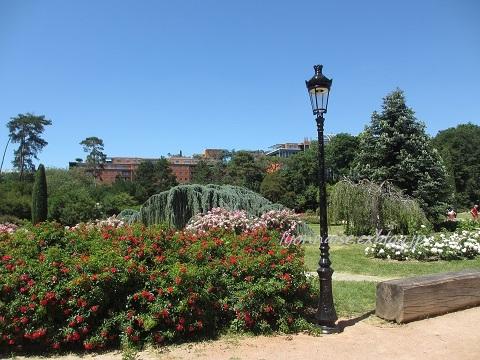 テットドール公園のバラは・・・_c0186684_05072463.jpg