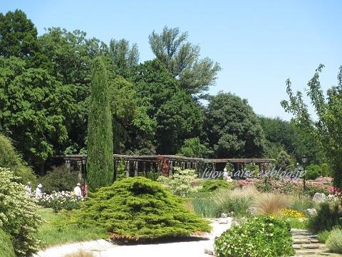 テットドール公園のバラは・・・_c0186684_05073858.jpg