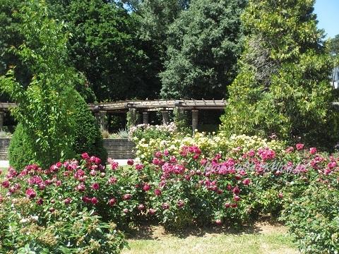 テットドール公園のバラは・・・_c0186684_05102049.jpg
