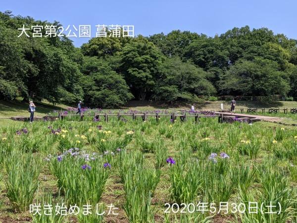大宮第二公園 菖蒲田_b0061890_12505248.jpg