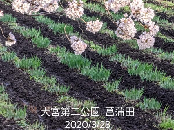 大宮第二公園 菖蒲田_b0061890_12514645.jpg