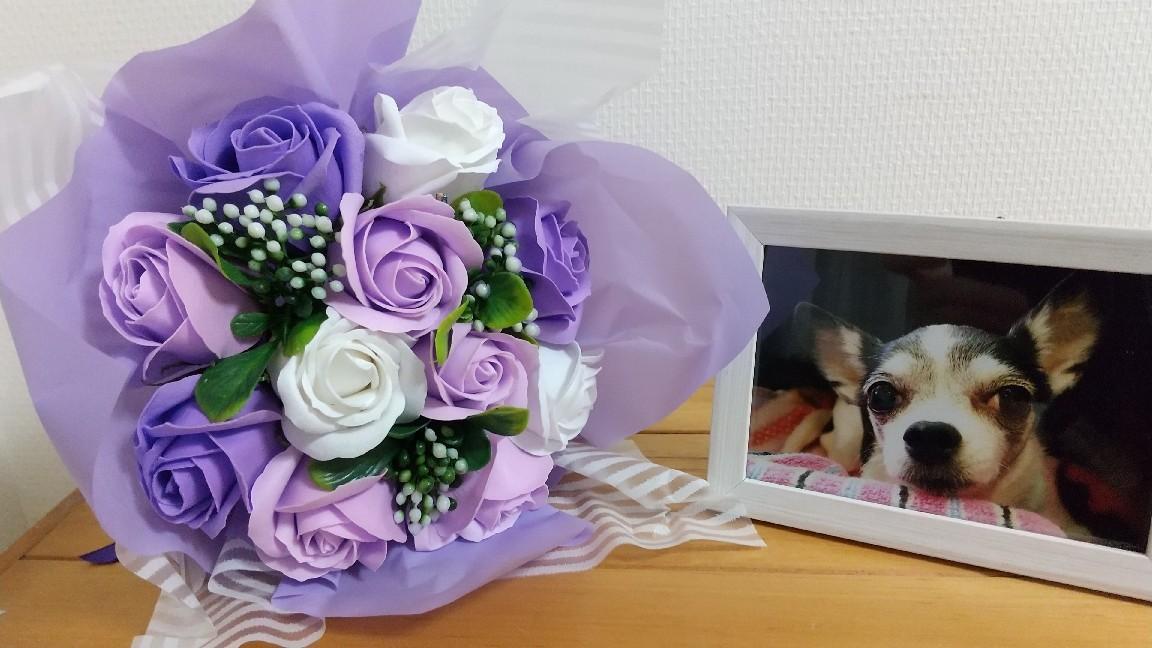 ももちゃんへお花を頂きました!_c0109891_23000251.jpg